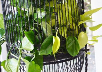 BirdcagePlanter_AFTER_3_web