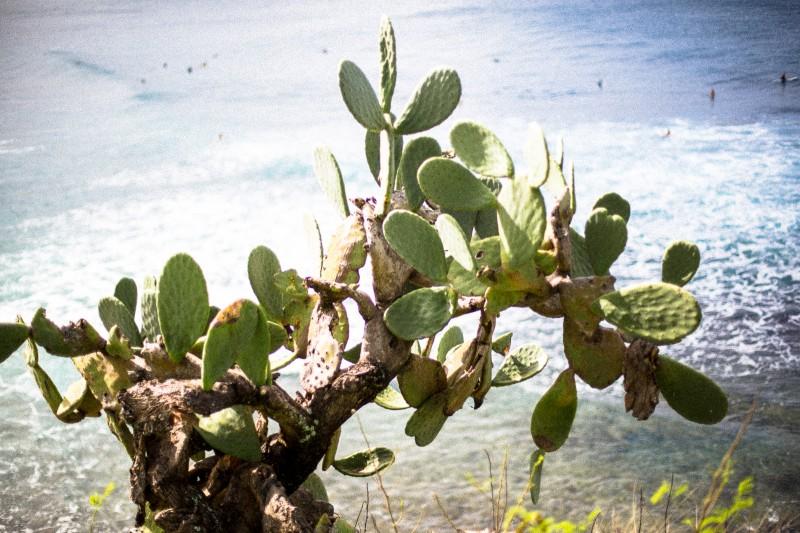 mrkate_maui_cactus