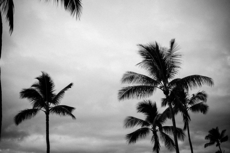 mrkate_maui_palms_bw_2